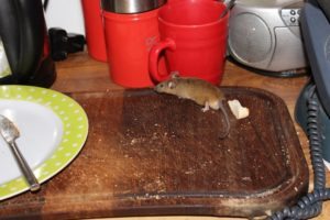 Mouse control in South Harrow