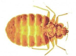 bedbug control london