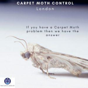 carpet moth control london