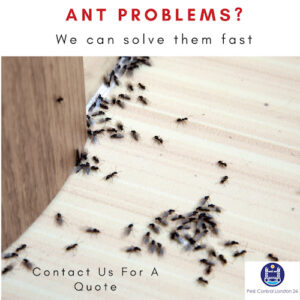 Ant Control East Central London