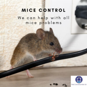 Mice Control East London