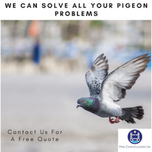 Pigeon Control North East London