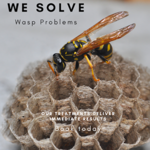 Wasp nest removal North London