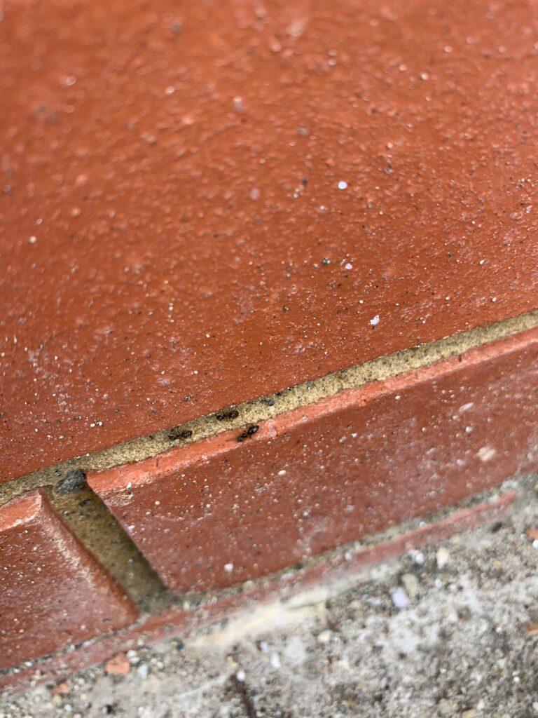 Ant control Edgware